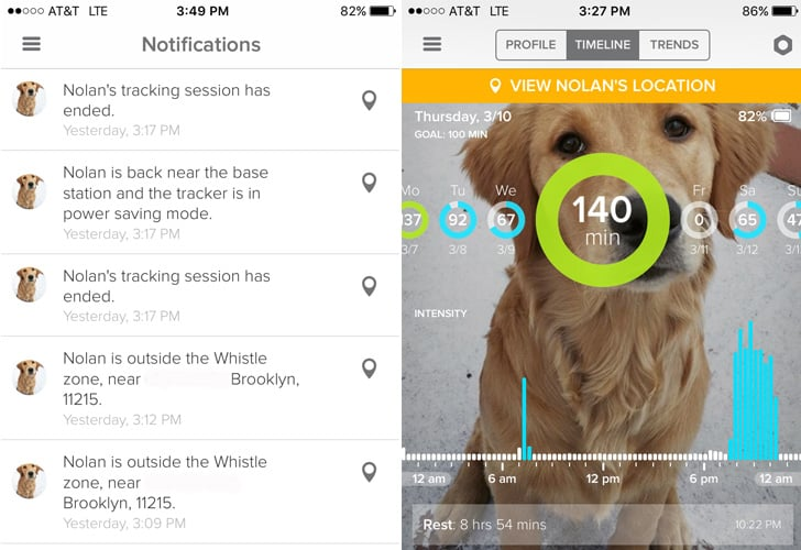 Fitness Trackers For Dogs Popsugar Pets