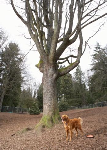 Dog Park Etiquette For Humans
