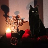 This Cat as Salem