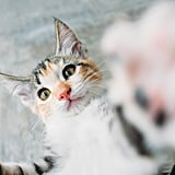 This kitty wants to grab the camera!