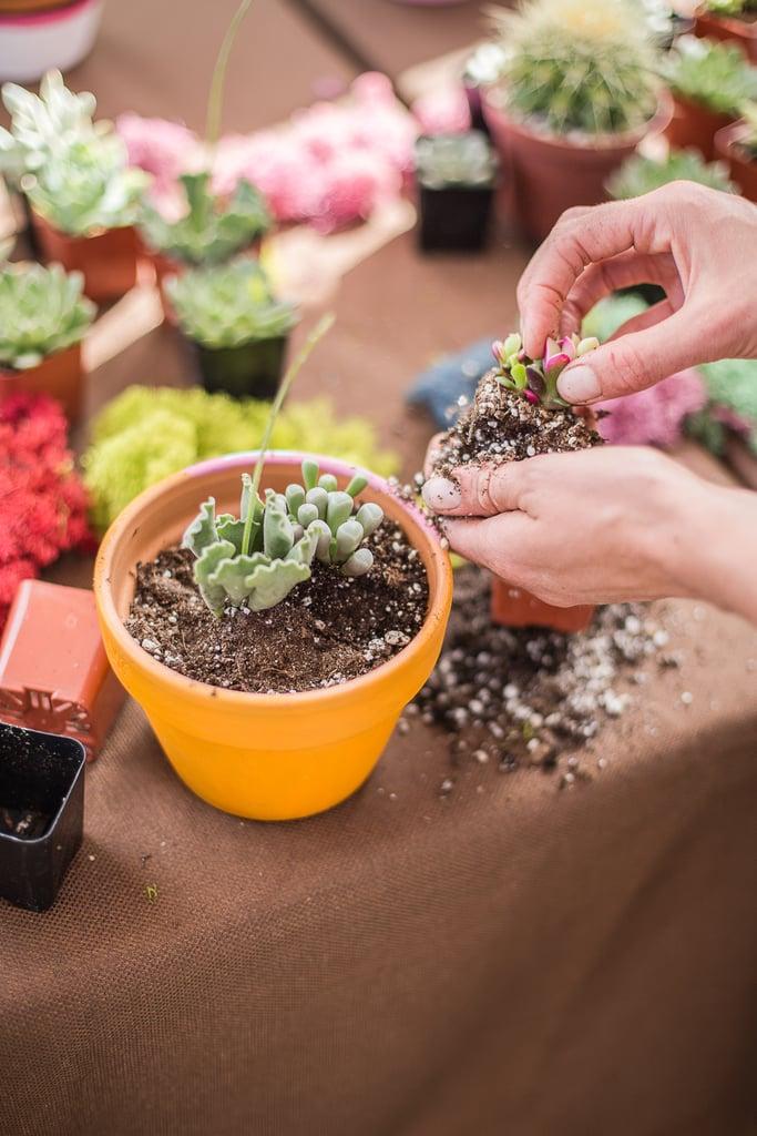 Succulent Planting