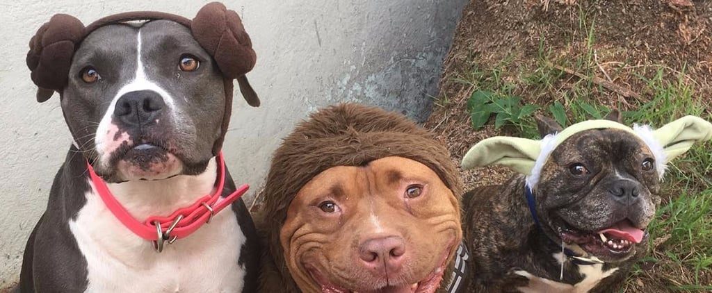14 Pictures That Prove Pit Bulls Are Even Cuter on Halloween