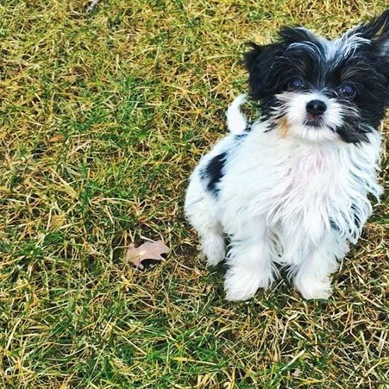 كلب توم برادي وجيزيل بوندشين الجديد فلفي