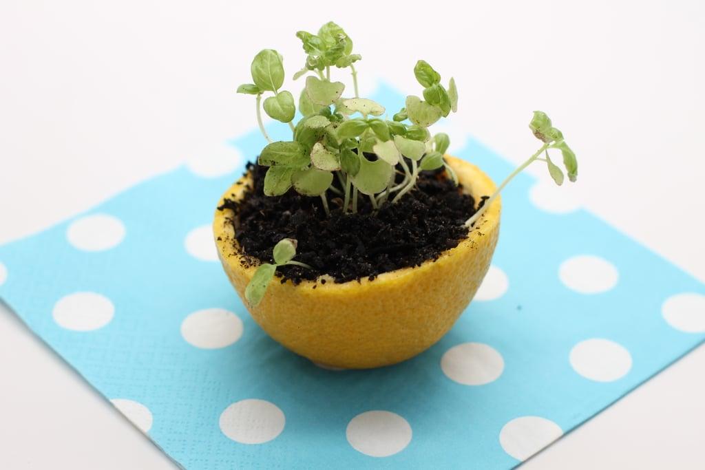 Start Seedlings in a Citrus Peel Pot