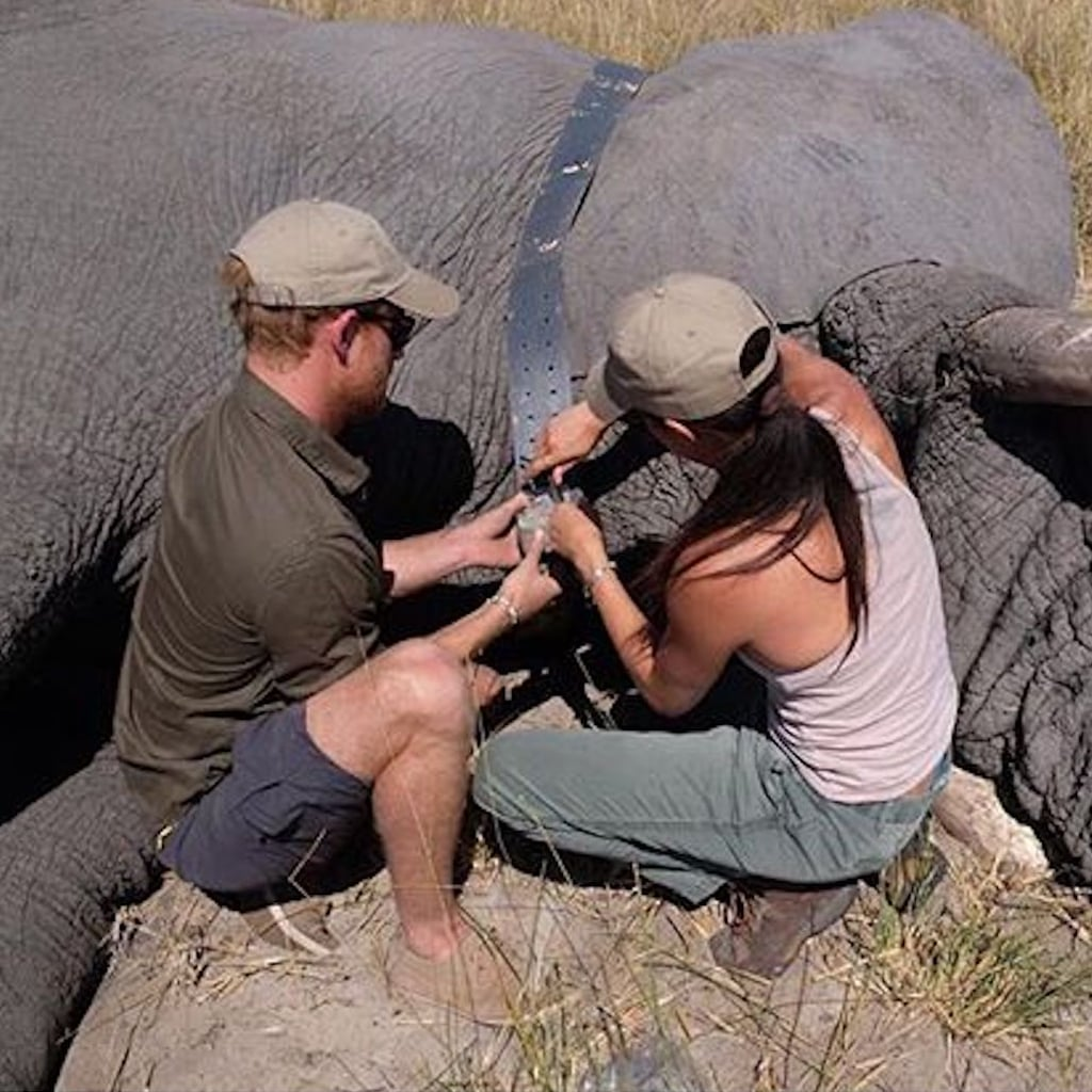Prince Harry and Meghan Markle Botswana Throwback Picture