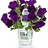 Supertunia Royal Velvet (Petunia), Purple Flowers ($35)