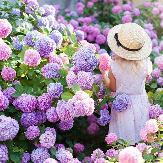 طريقة لتغيير لون زهور الهِدْرَانَج