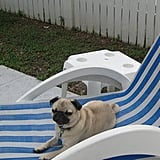 Pet Pic of the Day: Poolside Pup