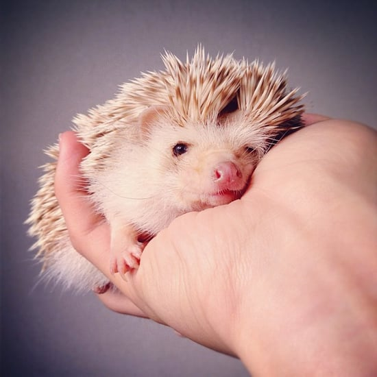 Darcy the Hedgehog I Pictures