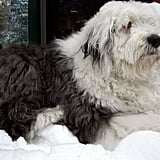 Production Designer Jamaica Pinnick's Old English Sheepdog, Slurp, has the best dog name ever.