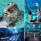 Aquariums the Whole Family Will Enjoy