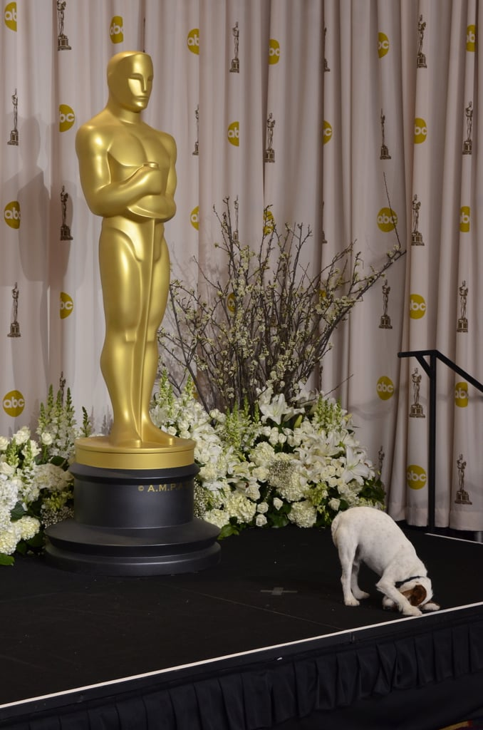 Uggie takes a bow. Source: AFP
