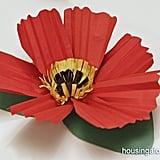 Giant Poppy Plants