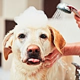Brush Your Dog Out Before a Bath