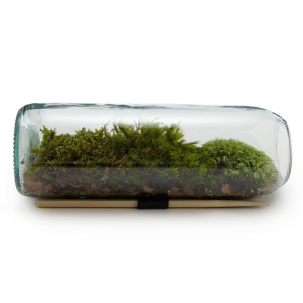 Moss Terrarium ($38)