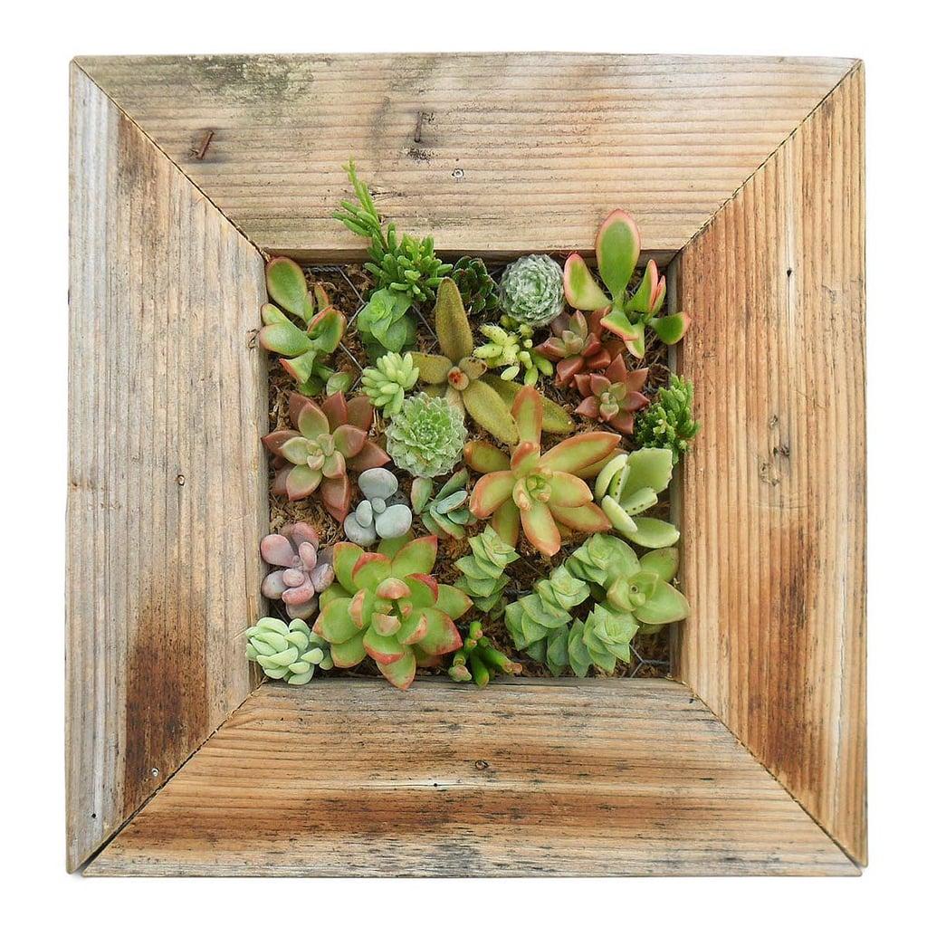 Succulent Living Wall Planter Kit ($110)