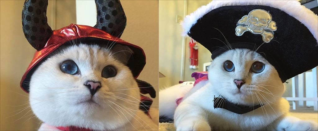 Cats in Halloween Costumes | Instagram