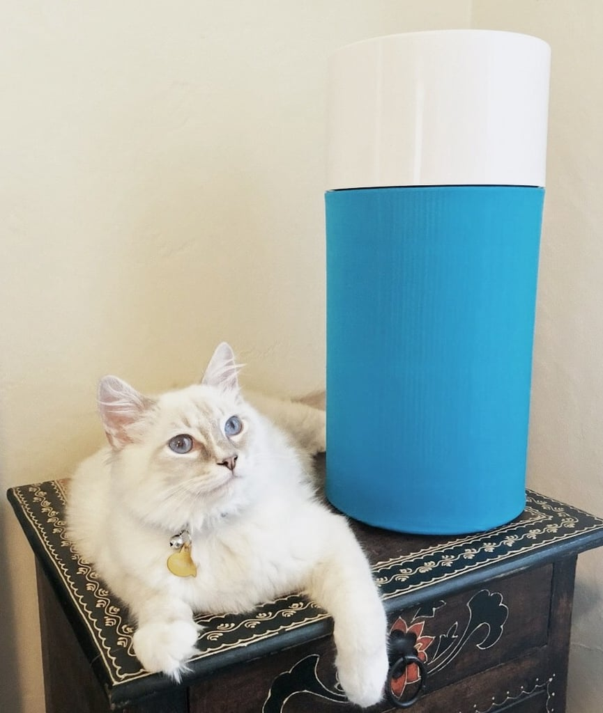 Best Air Purifier For Pet Hair