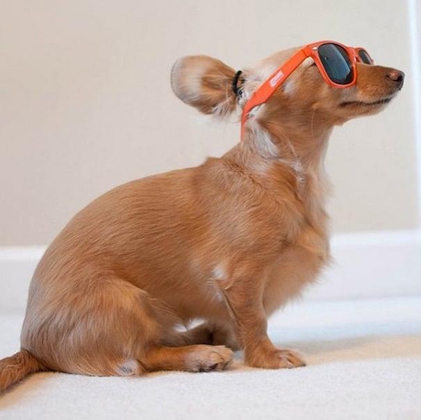 Dog Bun Hair Trend
