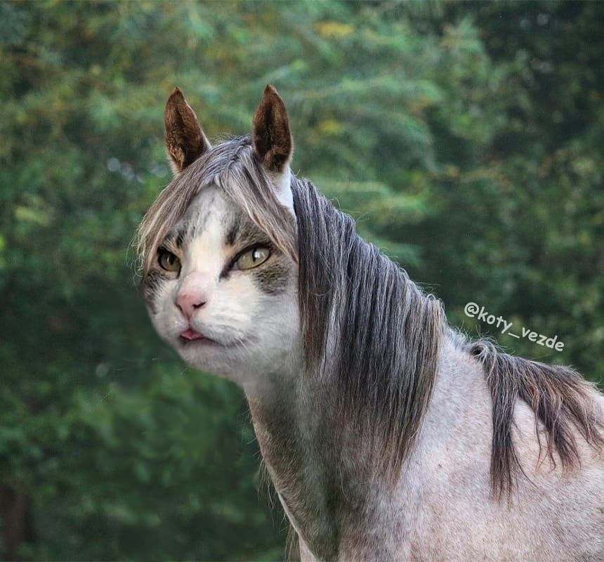 Horse With a Cat's Face
