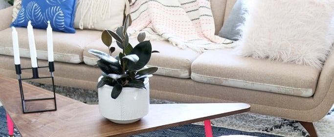 7 Houseplants Even Trendier Than the Fiddle Leaf Fig