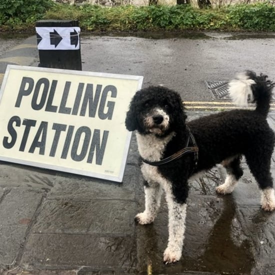 Cutest Dogs at the 2019 UK General Election Polling Stations