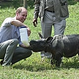 William fed a baby rhino during a visit to the Kaziranga National Park in India in April 2016.