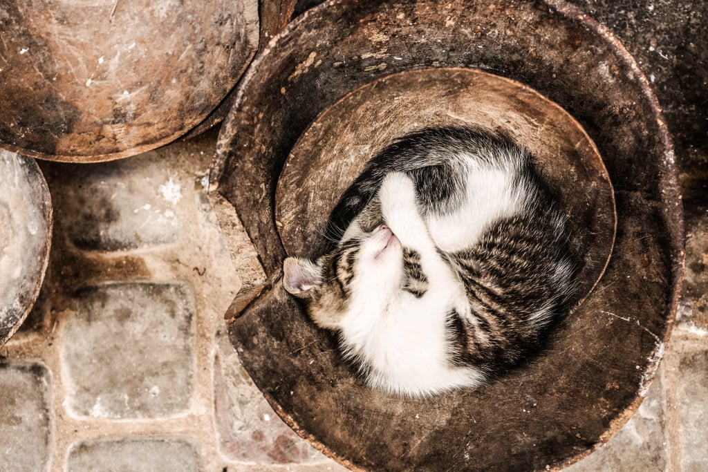 Asleep in the bottom of a bucket, like it's normal.