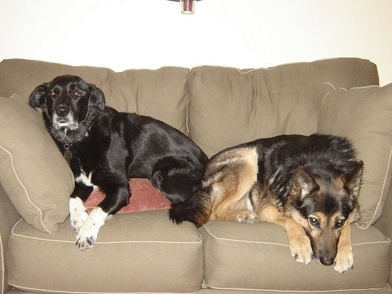 Pets in the House: A Loveseat Built For Two