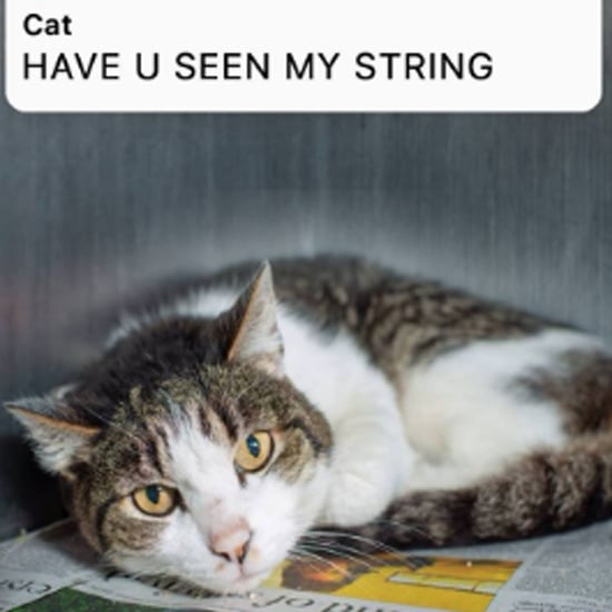 Cat's Text Exchange With Its Human About Blue String