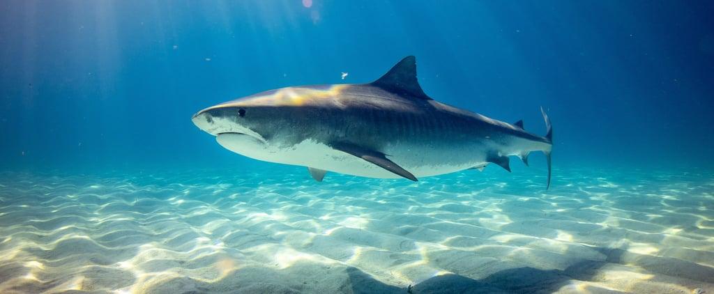 Discovery Shark Week 2019 Lineup