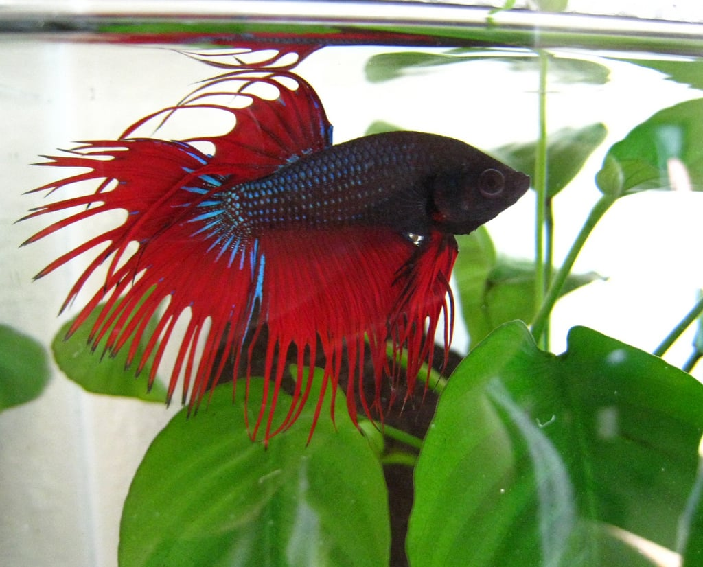 Popular pet fish names most popular pet names for for Fish for pets