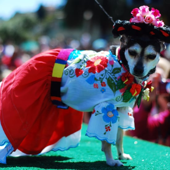 Dogs Dressed as Frida Kahlo