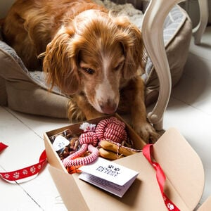Quirky Gift Library Dog Christmas Eve Box
