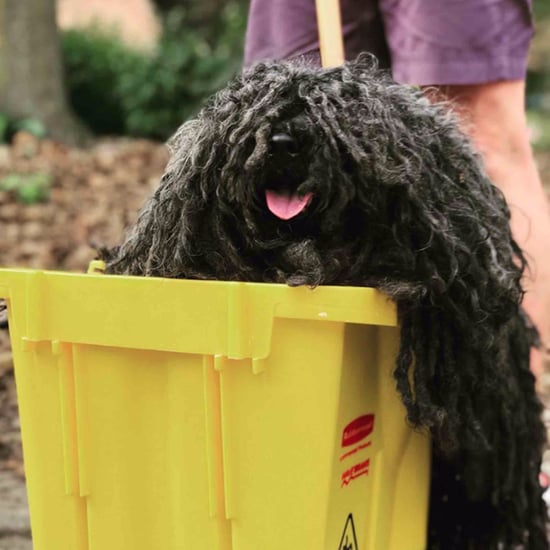 Dog's Mop Halloween Costume