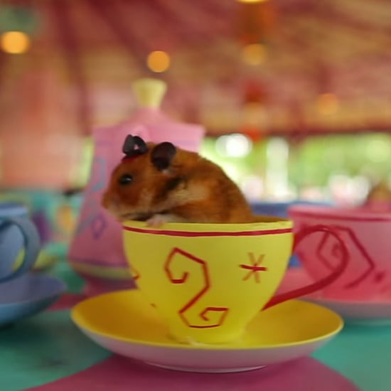 Tiny Hamster Goes to Disney World