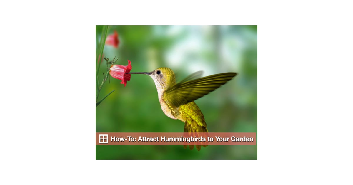 How to Attract Hummingbirds to Your Garden | POPSUGAR Home