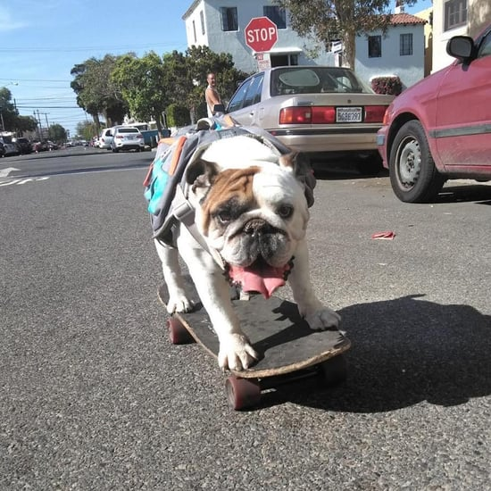 Watch Henny the Skateboarding Bulldog Shred the Streets