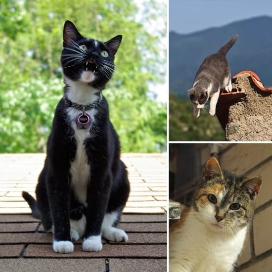 Summer Sizzles With Cats on a Hot (Tin) Roof