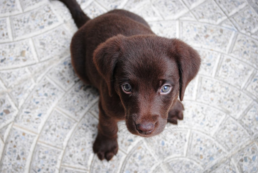 Cute Pictures of Puppies