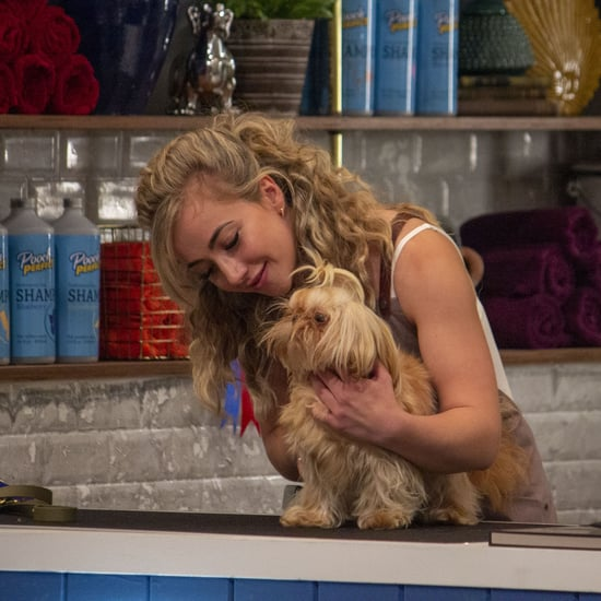 All the Details on BBC's New Dog Show Pooch Perfect