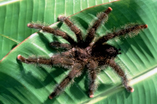 Creature Features: Spiders