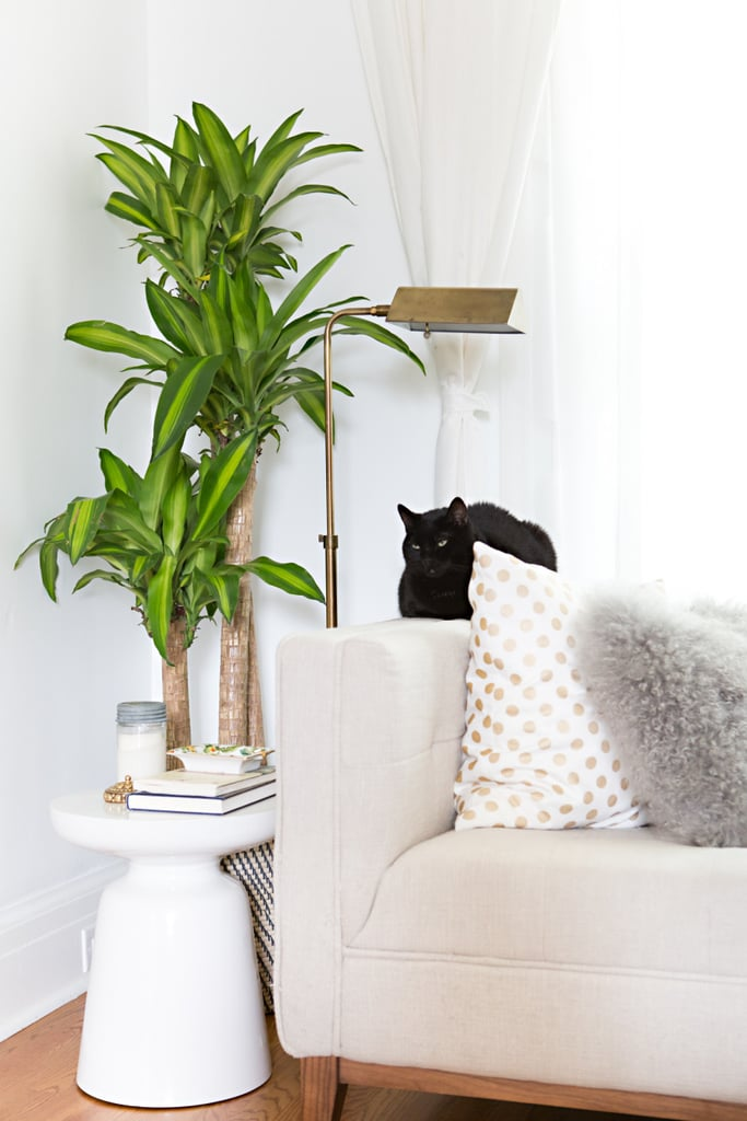 Large Indoor Plants | Chic Renter Hacks You Must Know | POPSUGAR ...