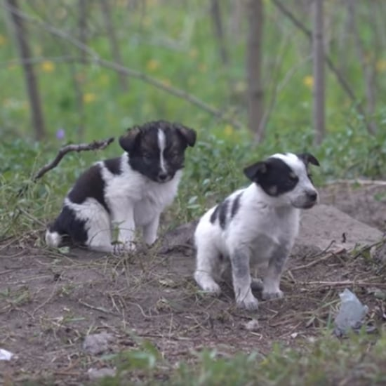 Puppies of Chernobyl Documentary