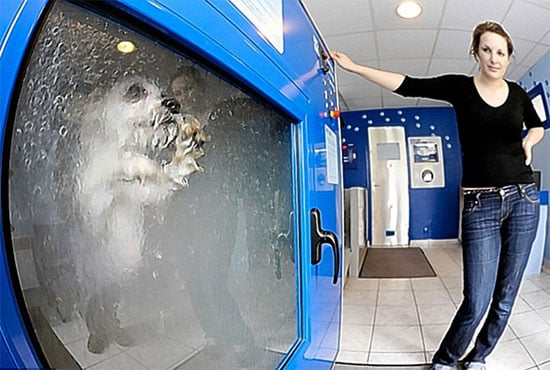 Brilliant or Baffling? Dog-o-Matic Washing Machine