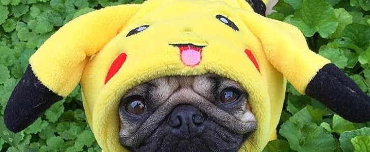 Pokemon Halloween Costumes For Dogs