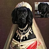 Royal Pet Portraits