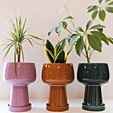 Kaya 3-Piece Ceramic Planter by Justina Blakeney