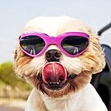 Doggie Sunglasses