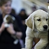 Photos From the 2010 AKC Top Dog Breed Press Conference